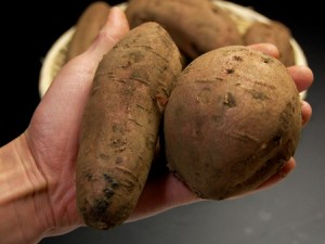 安納芋M/L(5kg)種子島産 サツマイモ さつま芋 蜜芋 送料無料 焼き芋 やきいも 焼いも 唐芋 安納紅 薩摩芋 さつまいも