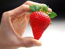 【送料無料】さくらももいちご(20粒)幻中の幻!!ももいちごに新品種登場♪【イチゴ/苺】