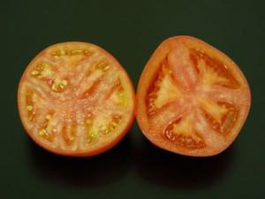『ロッソトマト』 愛知産 約1.2kg S〜Lサイズ (14〜30玉入) ☆