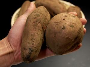 安納芋M/L(2kg)種子島産 サツマイモ さつま芋 蜜芋 送料無料 焼き芋 やきいも 焼いも 唐芋 安納紅 薩摩芋 さつまいも