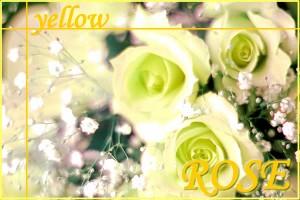 バラの花束(15本から) 年齢の数だけ選べる!バラの色も選べちゃう!【赤 黄 ピンク】【wd】【プレゼント】【お誕生日】【記念日】