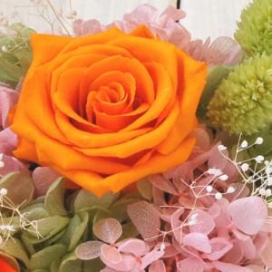 【送料無料】☆サニーオレンジ・ローズアレンジ☆プリザーブド【翌日配達/ギフト/結婚祝い/メッセージ/出産祝い/母の日/入学祝】 m_pr
