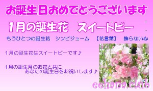 1月誕生花★デザイナーにおまかせフラワー10,000円【送料無料】ネット特価!!