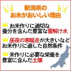 【送料無料】28年産 無洗米新潟県産コシヒカリ10kg(5kg×2)【お米/BLコシヒカリ/ハーベストシーズン】
