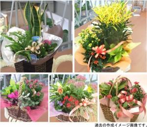可愛い寄せ鉢ミックス【送料無料】誕生日お花プレゼント 花宅配エーデルワイス