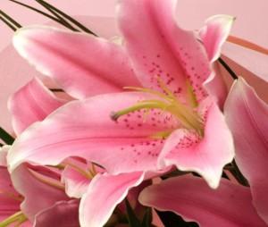 豪華に大輪系ピンク百合の花束45リン以上サプライズのギフトに!【送料無料】