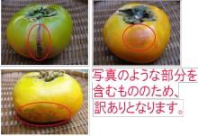 [送料無料]たねなし柿6kg箱(30−40玉前後入り)≪紀州和歌山県産≫農家が食べるちょっと[訳あり]だけど美味い柿♪
