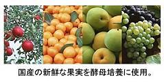 果実酵母  565ml x 3本 【送料無料/天然酵母飲料】