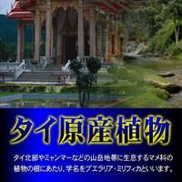 激安最安特価【プエラパニックSOS】バストケアサプリメントSALE[86]