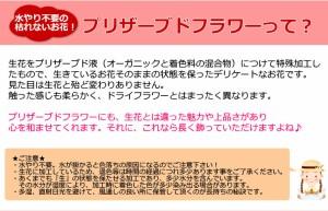 【誕生日】 【花】 【プリザーブドフラワー】ドームシリーズMマリーナ【女性】