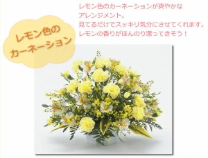【お見舞いのお花】レモン色のカーネーション