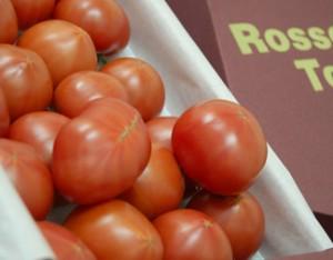 形状不揃い『ロッソトマト』 愛知産 2S〜2Lサイズ 1.2kg ※冷蔵 ○