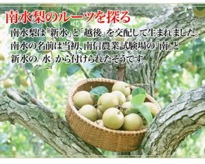 【送料無料】長野生まれの自信作 長野・新潟県産 南水梨5kg