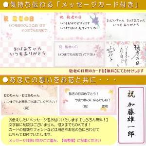 敬老の日★胡蝶蘭グループ6,000円【送料無料】ネット特価!
