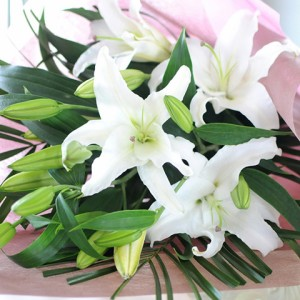 大輪系白いユリ25輪の花束 誕生日記念日送別のお花贈る 花ギフト 花宅配エーデルワイス花の贈り物