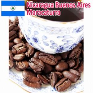 【レギュラーコーヒー豆】ニカラグア ブエノスアイレス農園/マラカツーラ種/シティ/ 200g