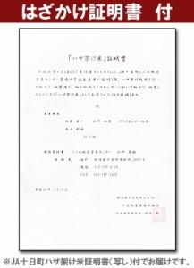 ハザ架け(自然乾燥)魚沼産コシヒカリ平成28年産5kg※送料無料(一部地域のぞく)
