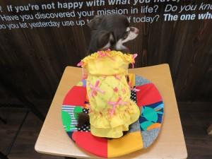 犬 犬服 ワンピース Mサイズ(3号) ドッグウェアー イエロー おでかけ 春夏用  リボン 女の子用 プレゼント付き!!