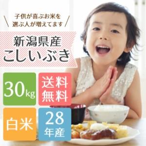 【送料無料】子供に大人気!新潟県産こしいぶき 30kg<送料無料 白米 5kg×6 お米 28年>