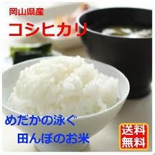 米 お米 29年産岡山県産こしひかり10kg 【5kg×2袋】  送料無料  北海道・沖縄は700円の送料がかかります。