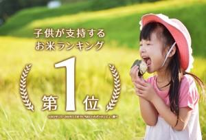 【送料無料】子供に大人気!新潟県産こしいぶき 5kg<送料無料 白米 5kg×1 お米 28年 新米 子ども>