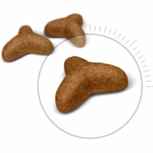 【ロイヤルカナン】 FCN ライト ウェイト ケア  400g 肥満傾向の猫用 【お試しサイズ】