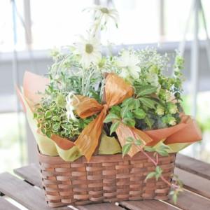 寄せ鉢ミックス プリティ-ミックス 誕生日 お祝のお花 プレゼント 送別会 退職祝い花ギフト 花宅配エーデルワイス花の贈り物