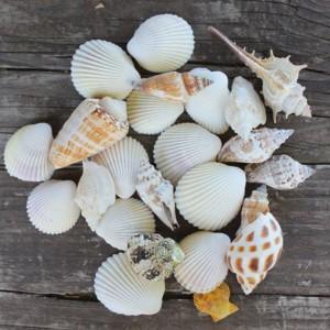 【マリン雑貨】 翌日出荷 シェルミックス スタンドパック入り 9種120g 貝殻 シェル  クラフトに