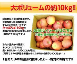 《送料無料》山形産 訳あり「サンふじりんご」バラづめ 約10kg (梱包込・26〜54玉) ※常温 ☆