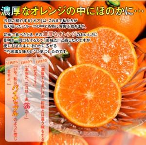 神秘の柑橘 オアオレンジ イスラエル産 約2kg(14〜20玉前後) 送料無料 ☆