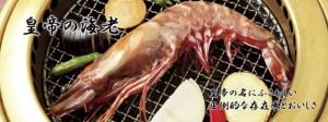 超特大!食べ応え抜群!皇帝の海老 天然シータイガー 1尾 約27cm【エビ】