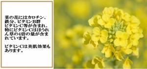【菜の花入り なたね油使用】唐船峡 菜の花ドレッシング 【唐船峡食品】【なのはな】【菜種油】【お土産】