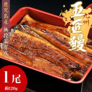 鹿児島産 うなぎ蒲焼「五匠鰻」約120g×1尾  ※冷凍 ☆