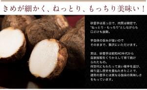 新潟県産 『砂里芋(さりいも)』 Mサイズ 約2.5kg ※常温 ☆