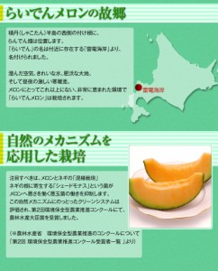 《送料無料》北海道産「らいでんメロン」 4〜6玉 良〜秀品 約8kg ※常温 ☆