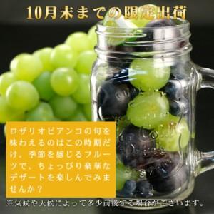 送料無料 ぶどう ブドウ 葡萄 ロザリオビアンコ 約2.5kg (3〜4房) 巨峰 高級白ブドウ 山梨産 長野産 フルーツ 旬 果物