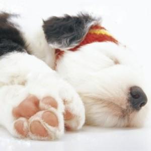 犬 肉球 ペンダント ブルートパーズ 【送料無料】 11月 誕生石  いぬ 天然石 ネックレス レディース シルバー プレゼント ギフト