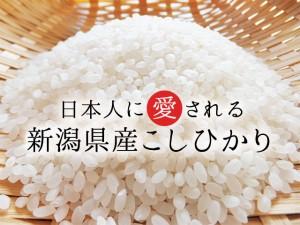 【日本に愛される】新潟県産コシヒカリ 白米 10kg(5キロ×2袋)【送料無料】《 29年産 夢 お米 10kg 安い 10キロ 新米 》