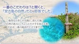 お中元・ギフト 沖縄県宮古島産 「塩マンゴー」 化粧箱 約1kg(2〜3玉) ※常温☆