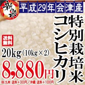 平成28年 会津産 特別栽培 コシヒカリ 20kg(10kg×2)※沖縄は別途1000円