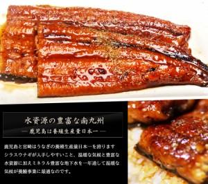 鹿児島県産 うなぎ 蒲焼き ギフト 約170gx2尾セット 送料無料
