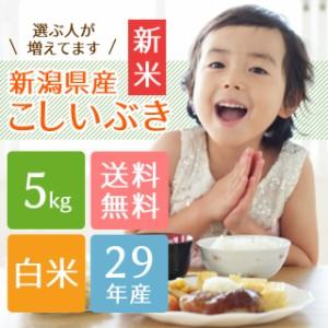 新米 【子供に大人気】新潟県産こしいぶき 白米 5kg 【送料無料】29年産 お米 5kg 5キロ