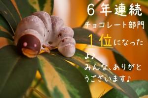 超リアル!かぶと虫の幼虫チョコレート 【冷蔵発送】