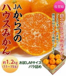 佐賀県産 JAからつのハウスみかん Mサイズ 約1.2kg(11〜15玉) ※常温 ☆