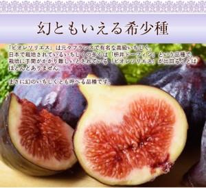 佐賀産 高糖度いちじく 「ビオレソリエス」 2パック (1パック約300g) ※冷蔵 ◯