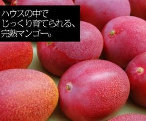 【特大サイズがあまっちゃう!?】宮崎県産 『特大3Lマンゴー』 1玉(450〜509g) ※常温☆