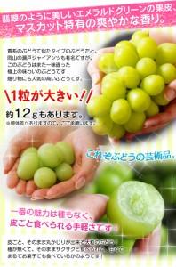 ぶどう 長野県産 「貯蔵品シャインマスカット」 1房 計約400g ※冷蔵  ○