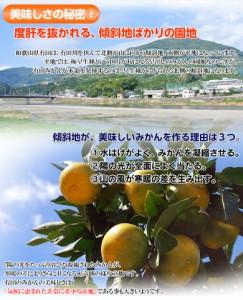 《送料無料》和歌山県産 有田みかん 2Lサイズ 約4.5キロ ※常温 ☆