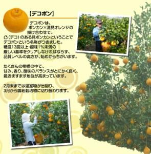 《送料無料》和歌山・有田産 ハウス 『デコポン』 8〜9玉 約3kg ※常温 ○
