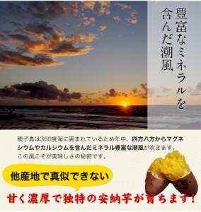 【送料無料★3セット購入で3セットおまけ】本場 種子島産 長期熟成 訳あり安納芋1kg《2月末〜3月中旬頃より順次出荷》